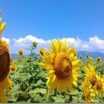 ビワイチ!1-6「烏丸半島 ピエリ守山 第一なぎさ公園」琵琶湖一周ブログ