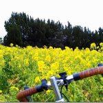 伊良湖岬へフェリーで渡り、渥美半島自転車旅!ABホテルに宿泊