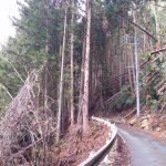 愛知県新城ミツマタ群生地を探す自転車旅3【ミツマタが無い!?】