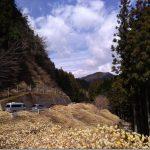 愛知県新城ミツマタ群生地を探す自転車旅【基本情報編】