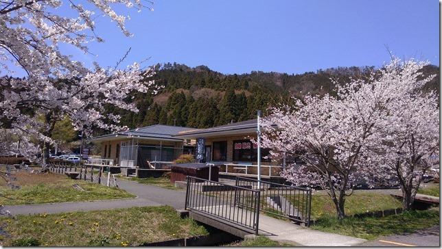 余呉湖の桜画像