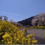 滋賀の奥琵琶湖桜自転車旅1【余呉川の桜が優勝!?】