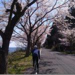 滋賀の奥琵琶湖桜自転車旅2【大浦~二本松の西浅井マキノ線がお勧め】