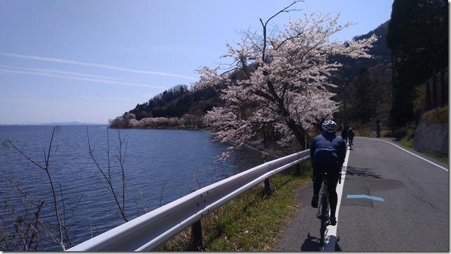 海津大崎の桜サイクリング画像4