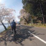 滋賀の奥琵琶湖桜自転車旅3【海津大崎の桜満喫】