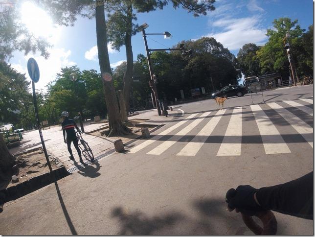鹿が横断歩道渡る