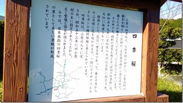 四季桜看板の画像