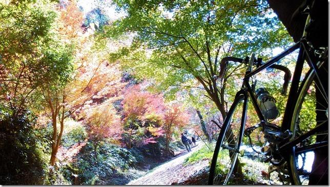 柿ケ入沢散歩道の四季桜画像
