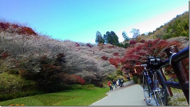 川見四季桜の里の画像
