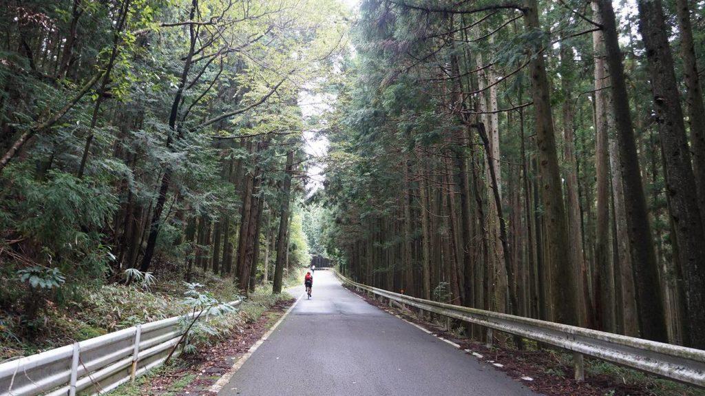 作手清岳新城線の林道